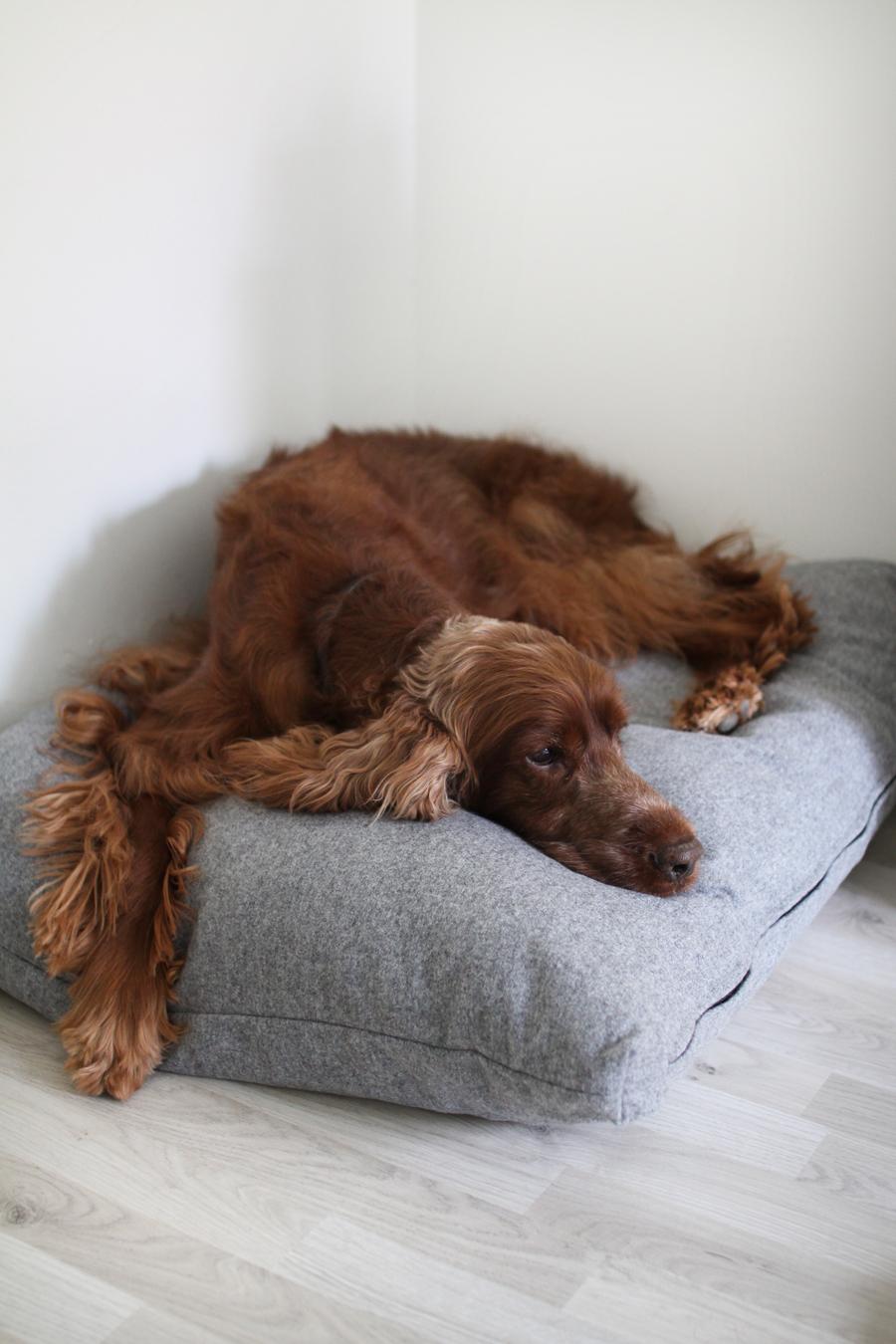 koiran peti