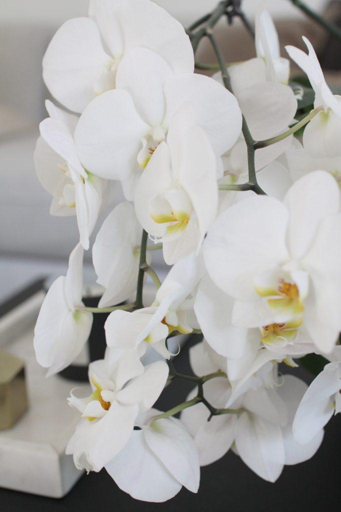 orkidea kukat